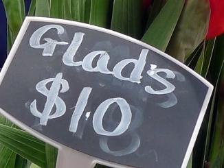 glads_s